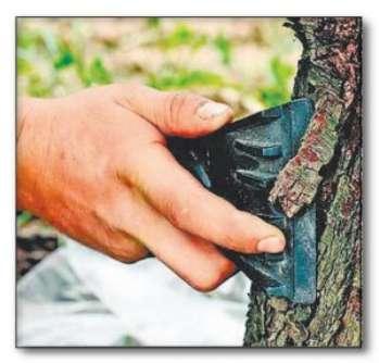 Виды повреждений деревьев и их защита