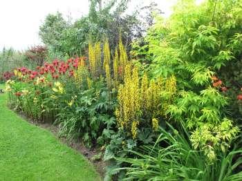 Высокие многолетники в дизайне сада