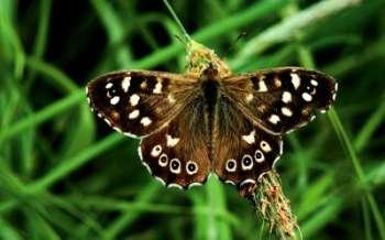 Бабочки - вредители сада и огорода