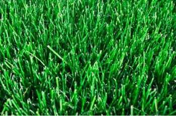 Выбор лучшей газонной травы для устройства газона