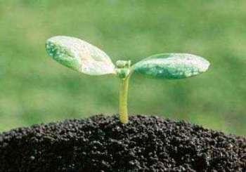 Роль органических удобрений в воспроизводстве плодородия почвы