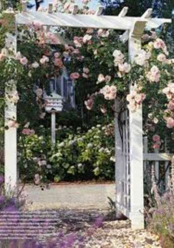 Пергола и столбы для роз