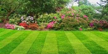Каким видом газона сделать грунт частью ландшафтного дизайна