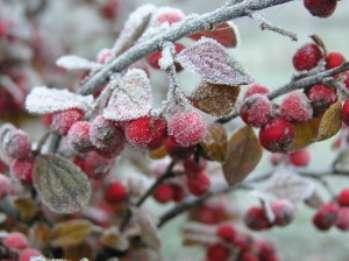 Особенности влияния существующих видов заморозков на растения