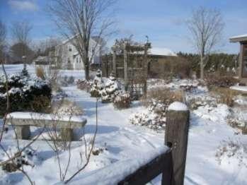 Укрытие садовых растений на зиму