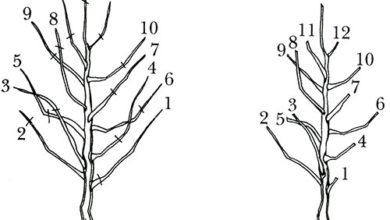 Photo of Как и когда проводить обрезку деревьев